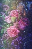 Valentine Day, fond de photo d'art abstrait de fleur rose, image de filtre de vintage Photo libre de droits