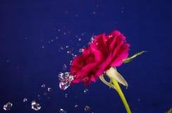 Valentine Day rose et éclaboussure de l'eau Photographie stock