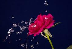 Valentine Day rose et éclaboussure de l'eau Image libre de droits