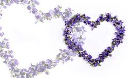 valentine Deux coeurs des violettes sur un fond blanc Photographie stock libre de droits
