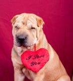Valentine dog Stock Images