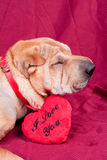 Valentine dog Stock Photo