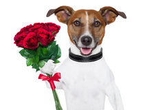Valentine dog Stock Photos