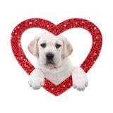 Valentine Dog arkivbilder