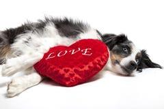 Valentine Dog Image stock