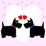 Valentine Dog Scottie Love Couple Royalty Free Stock Images