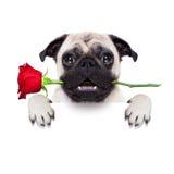 Valentine dog Stock Photo
