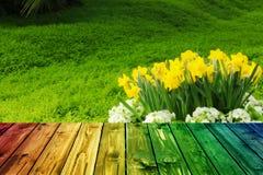 Valentine en bois colorée de fond de tache floue de fleur de coeur de table colorée de vert bleu de ciel bleu de table de barrièr Photographie stock libre de droits