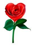 Valentine flower. Red valentine flower in shape of heart Stock Photo