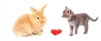 Valentine heart and cat and rabbit Royalty Free Stock Images