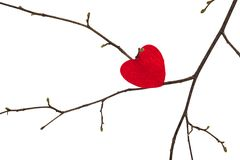 Valentine heart lies on a tree branch, royalty free stock images