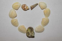Valentine heart made with shells Stock Image