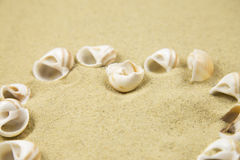 Valentine heart made with shells on sand background. Valentine heart made with shells royalty free stock photo