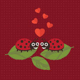 Valentine heureuse de coccinelle Photographie stock