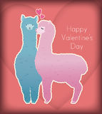 Valentine kiss. The female alpaca kissing the male alpaca Royalty Free Stock Image