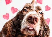 Valentine kiss Stock Photo