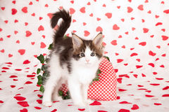 Valentine kitten Royalty Free Stock Photos