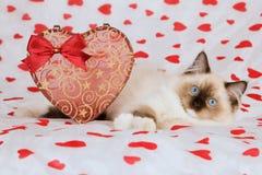 Valentine kitten Stock Image