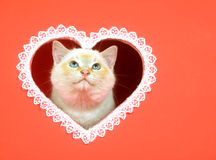 Valentine kitten with copy space Royalty Free Stock Photos