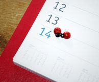 Valentine Ladybugs Royalty Free Stock Photo