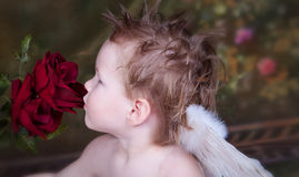 Valentine Love. Little Blue Eyed Angel looking toward light royalty free stock images