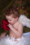 Valentine Love. Little Blue Eyed Angel looking down at roses stock photo