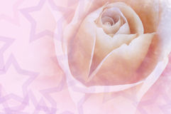 Valentine Love Rose Stock Images
