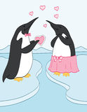Valentine Penguins Stock Photos