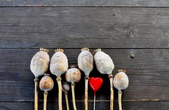 Valentine poppy heads. Poppy heads and little red heart on wooden background Stock Photography
