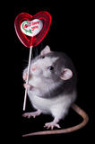 Valentine Rat. A rat is holding a valentine lollipop that says, I love you Royalty Free Stock Images