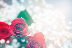 Valentine: Red Rose Bouquet With Baby's Breath Royalty Free Stock Photography
