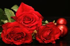 Valentine red rose Royalty Free Stock Photo