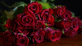 Valentine Red Roses closeup. Slow zoom stock footage