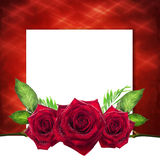 Valentine with red roses, white background Royalty Free Stock Images