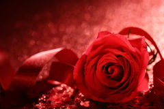Valentine Rose Images stock