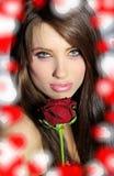 Valentine Rose Stock Photo