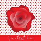 Valentine rose card Royalty Free Stock Photos