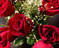 Valentine& x27; rose di giorno di s Fotografie Stock Libere da Diritti