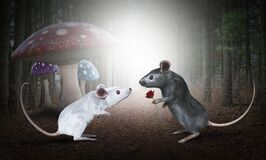 Valentine, Rose, Love, Mouse, Couple