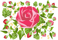 Valentine Rose Pattern. Vector Illustration of pink valentine Rose Pattern background Royalty Free Stock Image