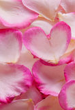 Valentine rose petals heart. Royalty Free Stock Photo