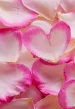 Valentine rose petals heart. Royalty Free Stock Photo