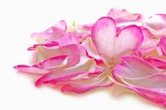 Valentine rose petals heart. Stock Images