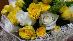 Valentine rose Royalty Free Stock Photos