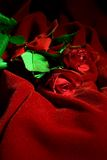 Valentine roses Royalty Free Stock Photography