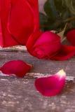 Valentine Roses Fotos de Stock