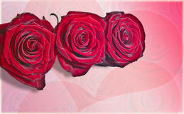 Valentine roses with hearts on the background Stock Illustration