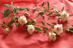 Valentine roses on red Stock Photo
