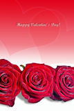 Valentine roses red bright with hearts Stock Photography