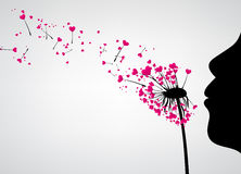 Valentine`s background with love dandelion. Royalty Free Stock Images